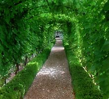 Grapevine Tunnel by Angiefire