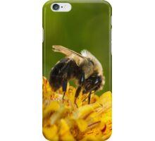 Bumble Bee Feeding iPhone Case/Skin