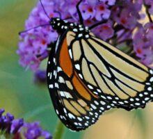 Sipping Nectar Sticker