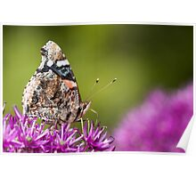 Red Admiral Butterfly With Green Bokeh Poster