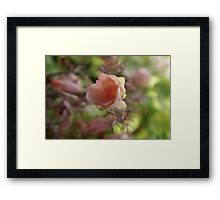 Succulents can help save water and do look beautiful; La Mirada, CA USA Framed Print
