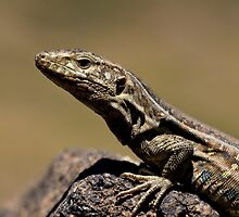 Sunbathing Lizard by Rob Corbett