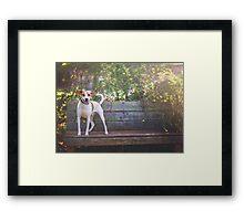 Jack Russel Mix on Bench Framed Print