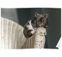 der kleine Hamster meiner Tochter Poster