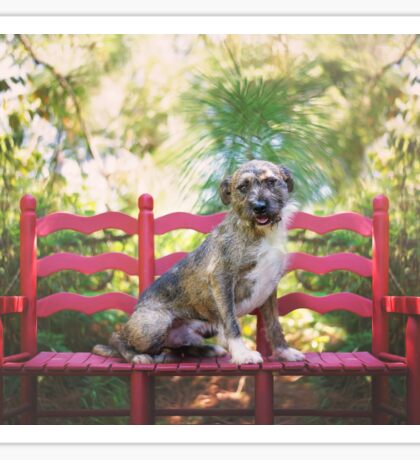 Wire Haired Dog on Red Bench Sticker