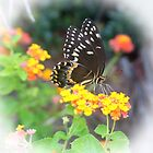 Black Swallowtail by Cynthia48