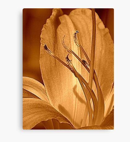 Traditional Canvas Print