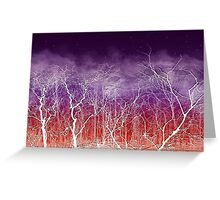 Sunset White Trees Greeting Card