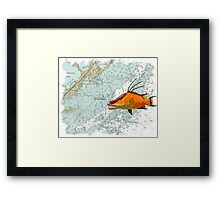 Hogfish on a Chart Framed Print