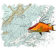 Hogfish on a Chart Photographic Print
