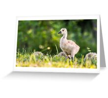 Baby Geese in the Morning Light  Greeting Card