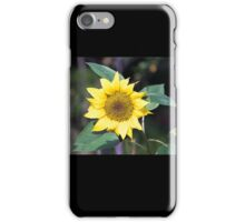 Lonely sunflower iPhone Case/Skin