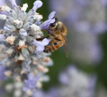 the bee and the lavender Sticker