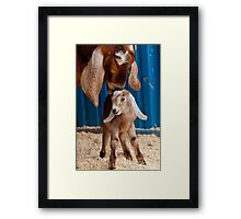 Licked Clean Framed Print
