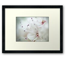 Super macro - this is NOT a cherry blossom! Framed Print