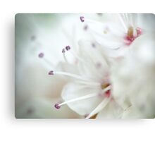 Super macro - this is NOT a cherry blossom! Canvas Print