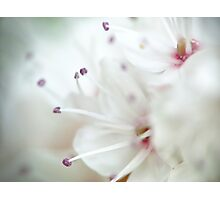 Super macro - this is NOT a cherry blossom! Photographic Print