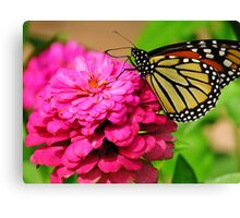 Butterfly & Zinnia  Canvas Print