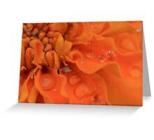 Orange flower close up Greeting Card