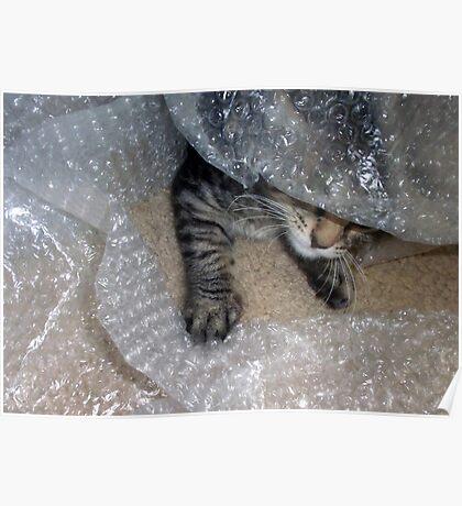 Mikino - Burrowing in Bubble-Wrap Poster