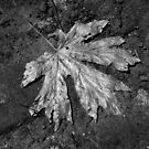 The Lone Leaf by Jaeda DeWalt