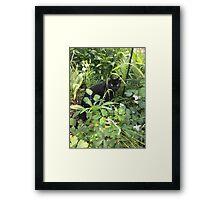 Wild Kitty Framed Print