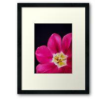 Spring Time Tulip Framed Print