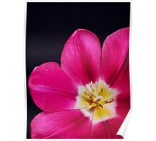 Spring Time Tulip Poster