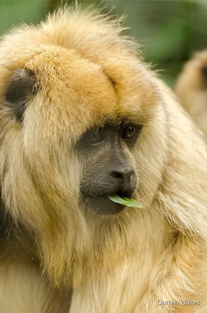 Howler Monkey by Darren Wilkes