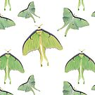 Luna Moths  by amandamakepeace