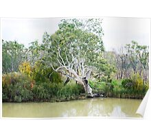 A Riverbank Beauty Poster
