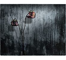 Red Roses Wabi Sabi Photographic Print