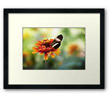 When Butterflies Dance Framed Print