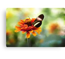 When Butterflies Dance Canvas Print