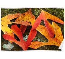 Autumn Leaves on Mossy Rock Poster