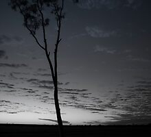 Gum At Dawn by Neil Bushby