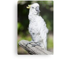 parrot on its perch Metal Print