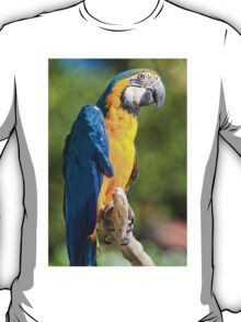 parrot on its perch T-Shirt