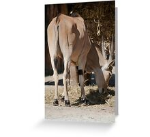 deer in the mountains Greeting Card