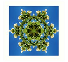 Hydrangea kaleidoscope - white flowers, green leaves, blue sky 161134 k6 Art Print