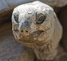 tortoise at zoo by spetenfia