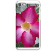 Dessert Rose bursting with color iPhone Case/Skin