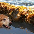 Too Much Seaweed Here! by Heather Friedman
