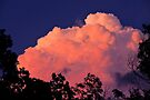 Way Up High On The Pink Clouds In The Sky by NatureGreeting Cards ©ccwri