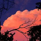 Way Up High On The Pink Clouds In The Sky 1 by NatureGreeting Cards ©ccwri