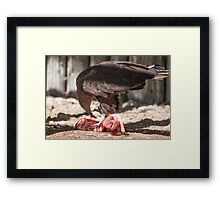 bird of prey that eat meat Framed Print