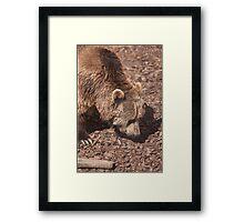 bear in the zoo Framed Print