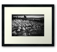 Surrey Heath Framed Print