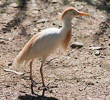 flamingo by spetenfia