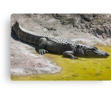 crocodile at the zoo Canvas Print